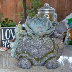 Decorative Moss Turtle Planter by ShopDePalma